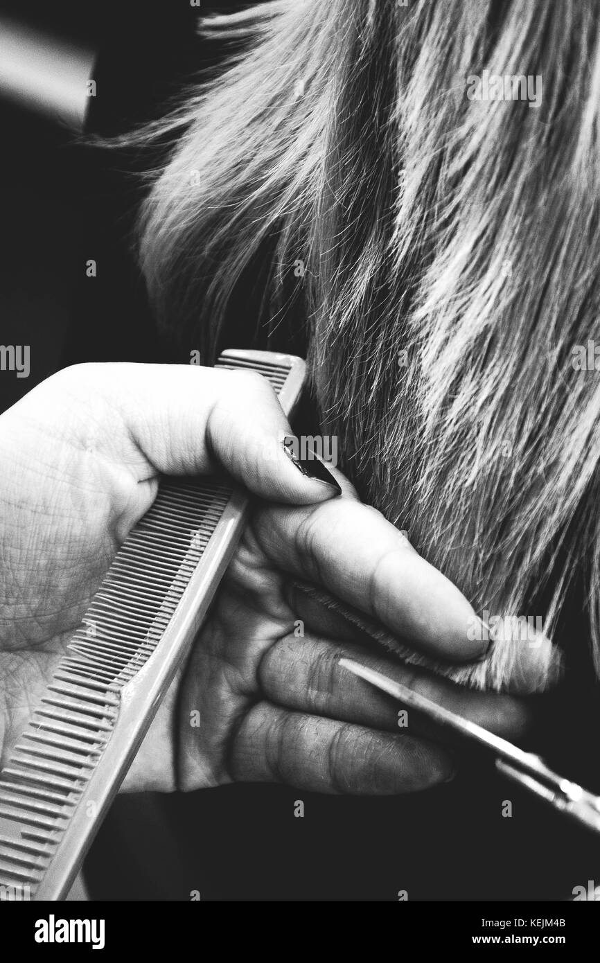 Hairstylist Trimming Clients Hair in Salon, Glasgow. Stock Photo