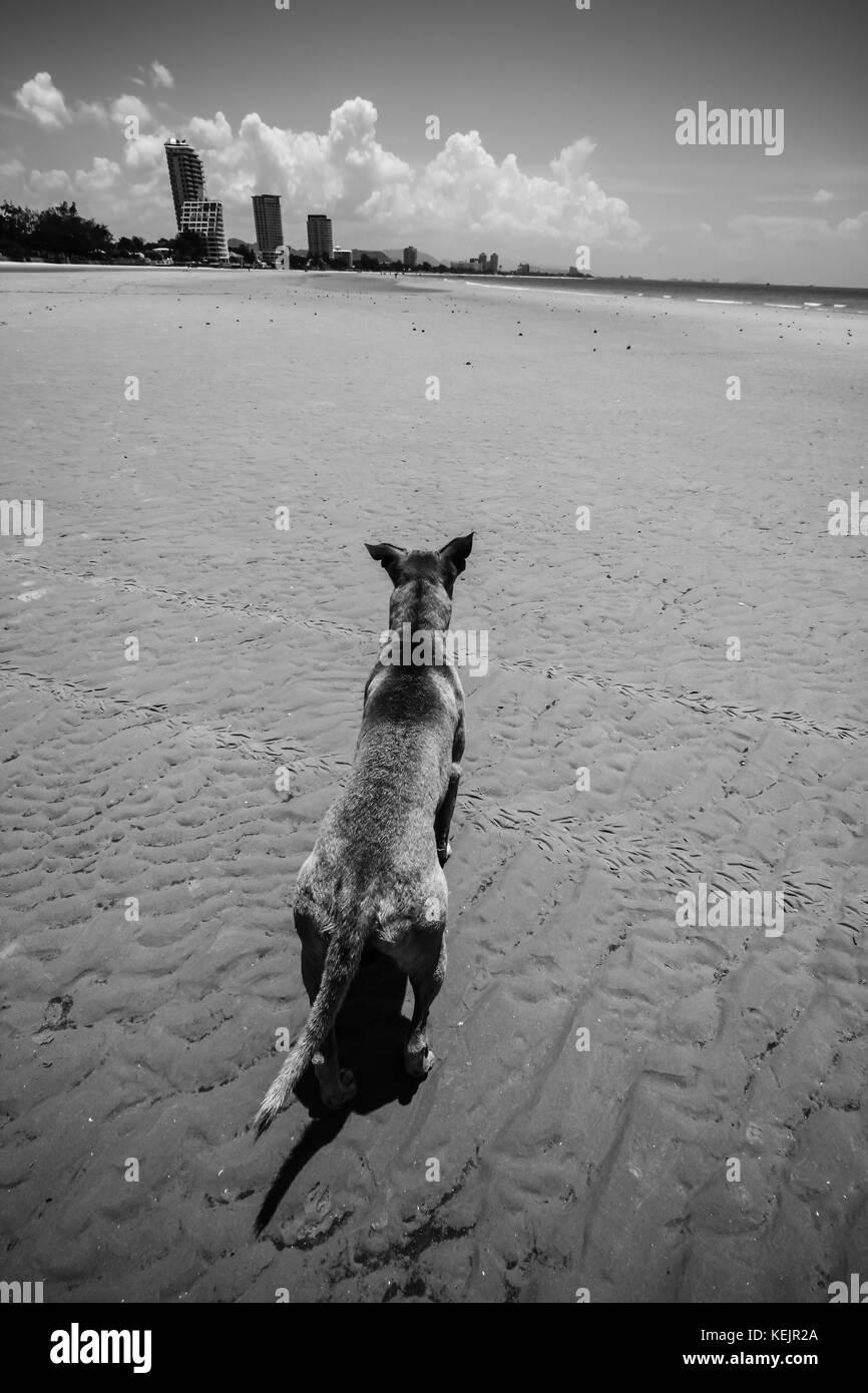 Dog on the beach in Hua Hin - Prachuap Khiri Khan, Thailand - Stock Image
