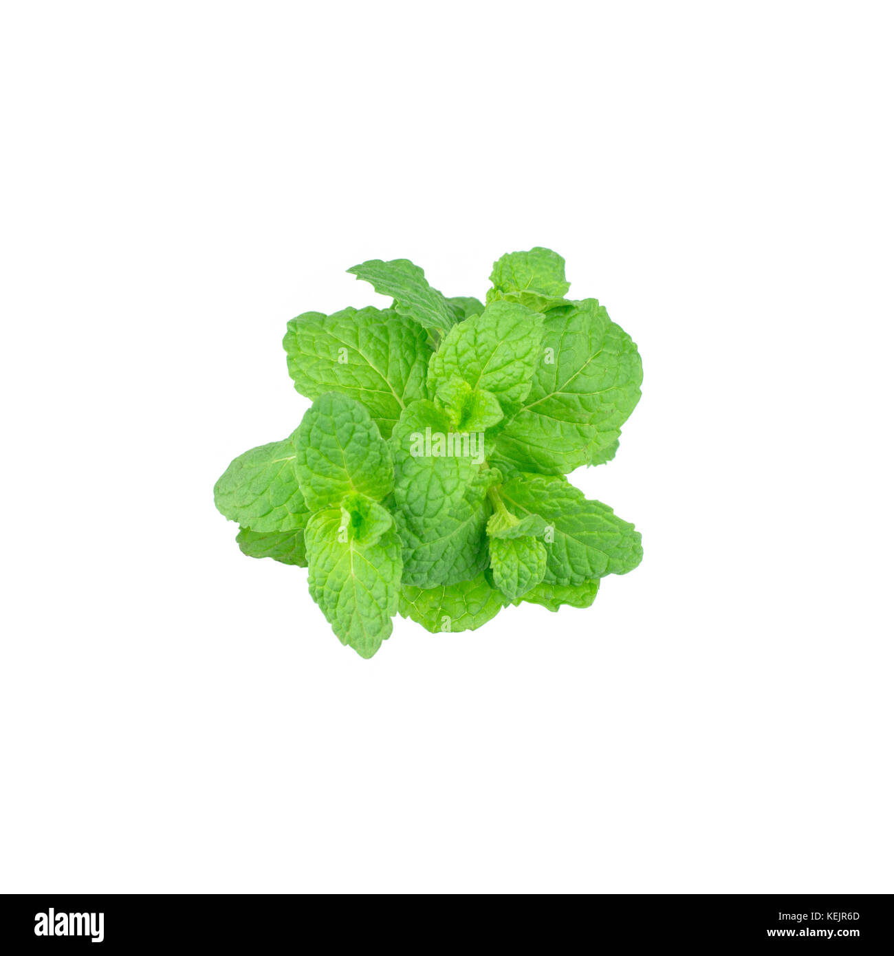 Mint leaf green plants isolated on white background