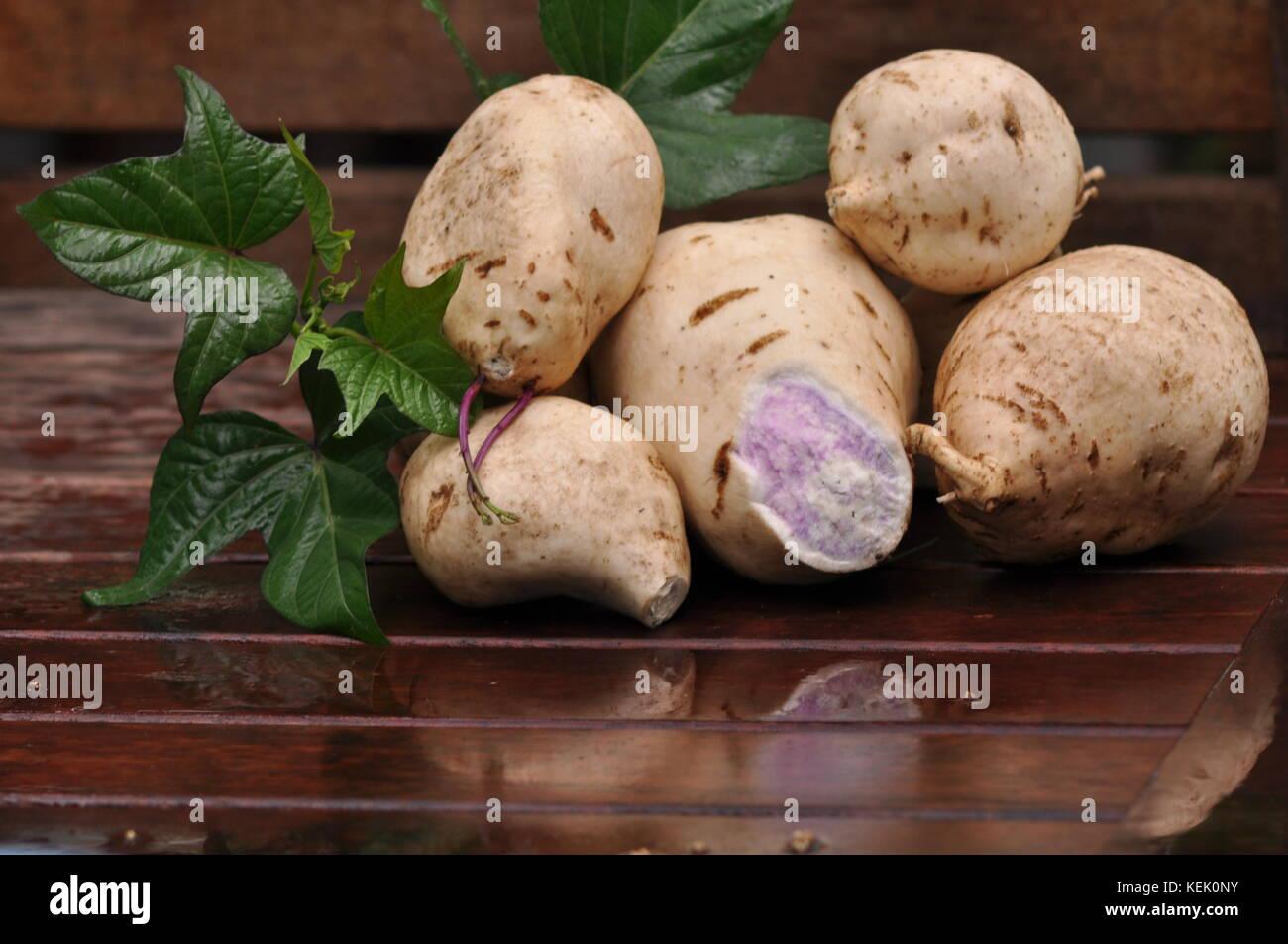 Sweet potato (Ipomoea batatas), variety 'Hawaiian Sunshine', Townsville, Queensland, Australia - Stock Image