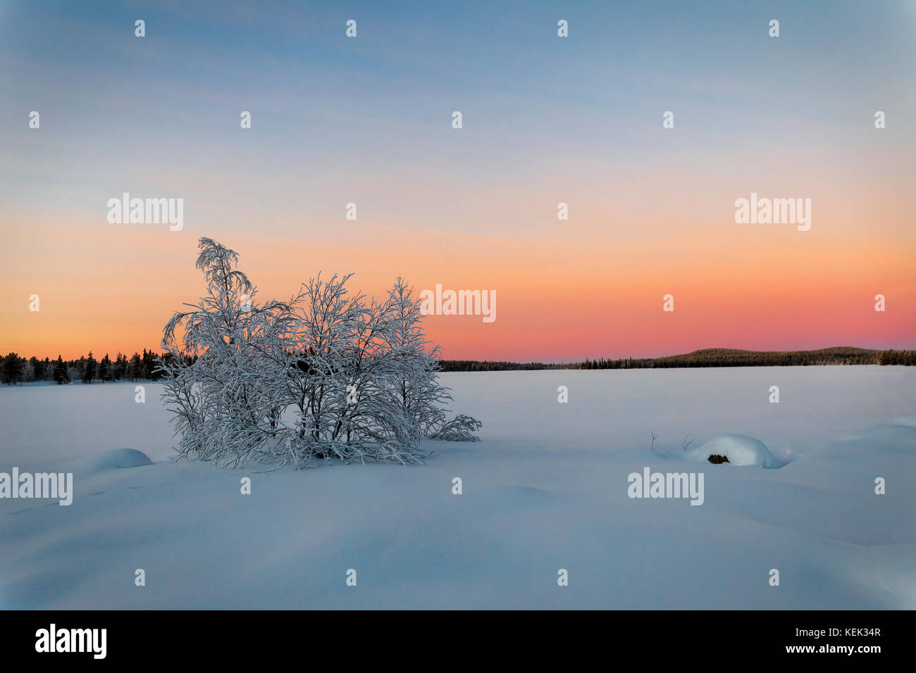 Bush on the frozen lake at sunset in Finland - Stock Image