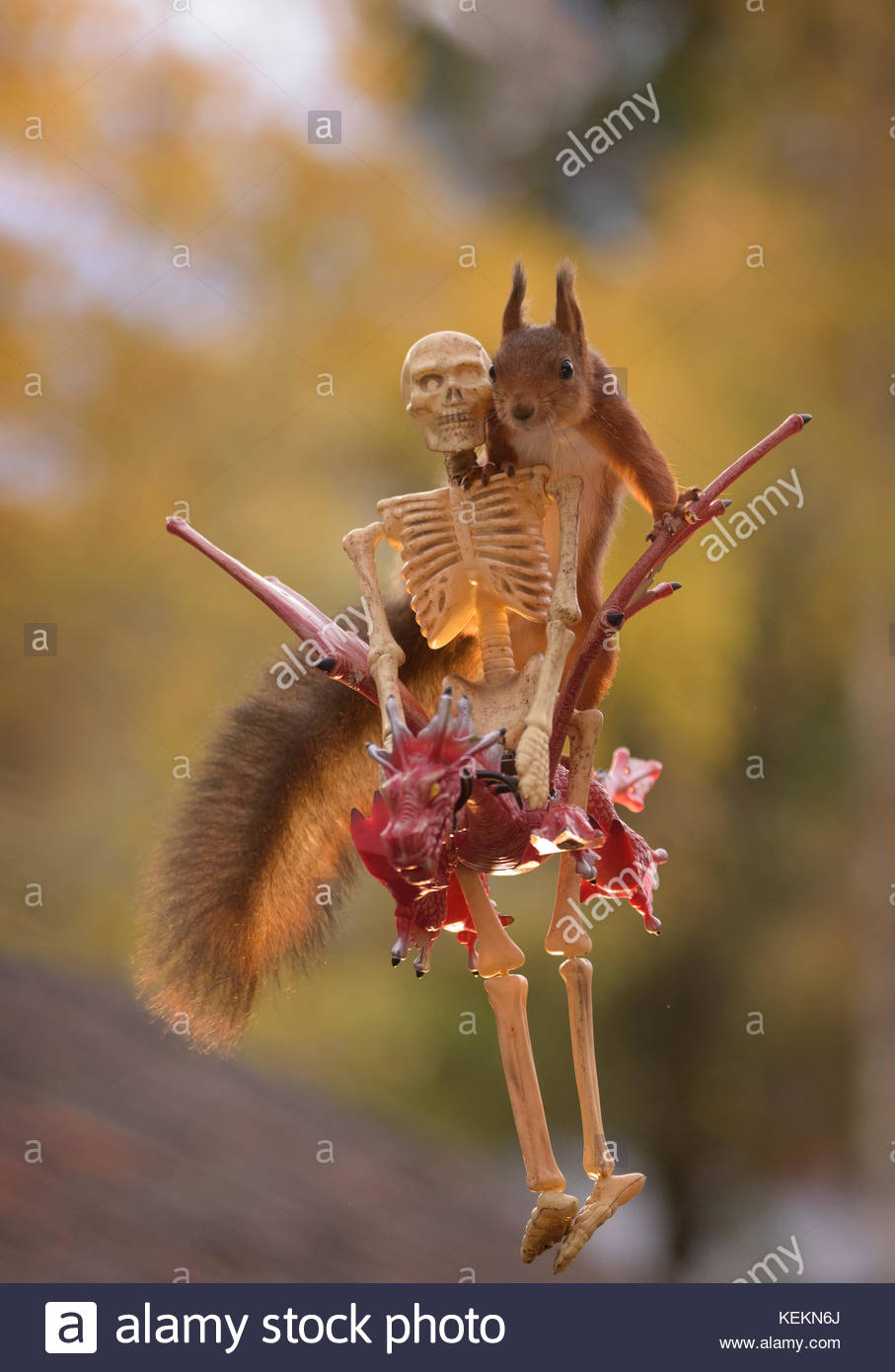 red-squirrel-and-a-skeleton-together-on-a-dragon-KEKN6J.jpg