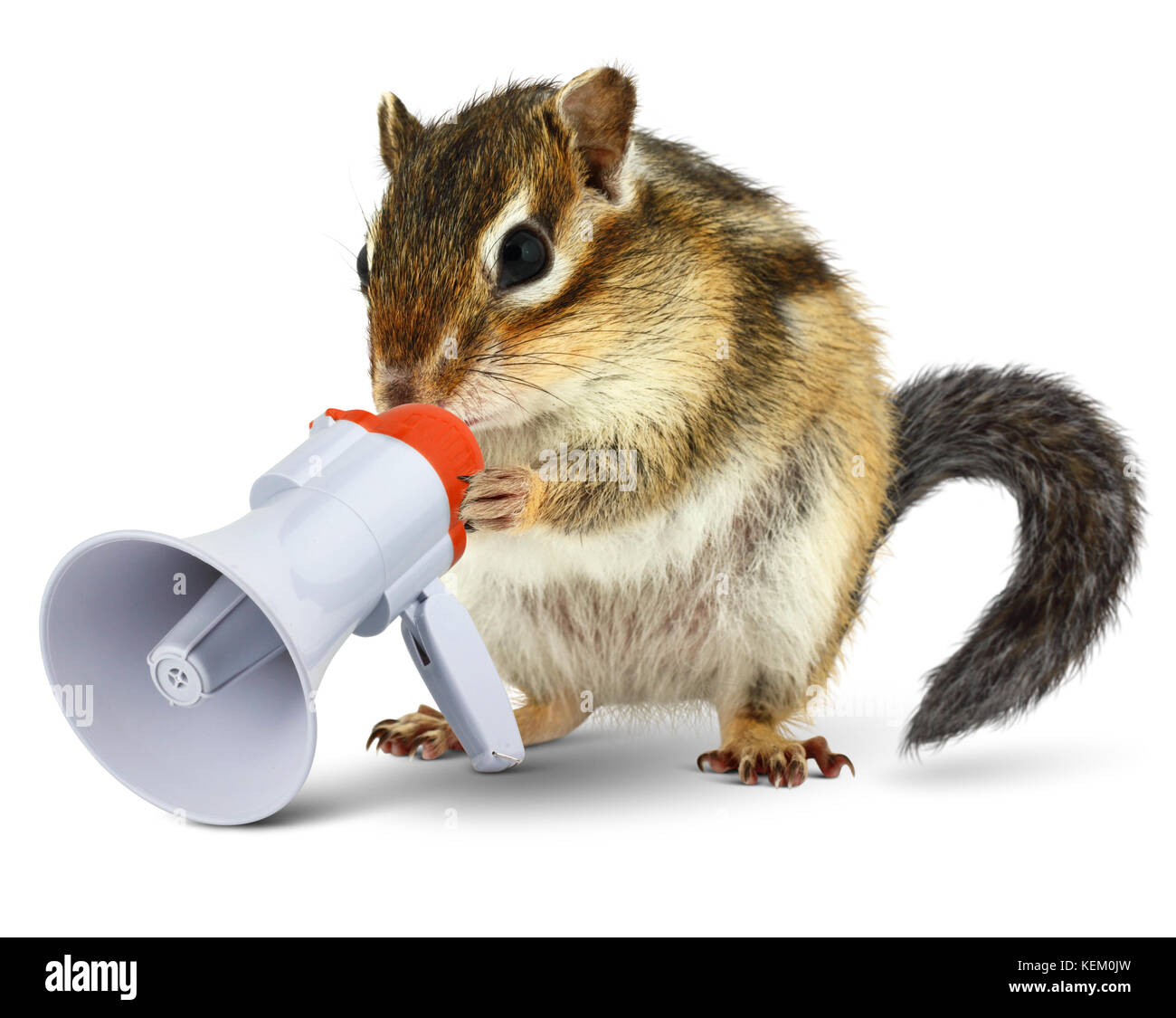 Funny animal chipmunk talking into megaphone, isolated on white - Stock Image