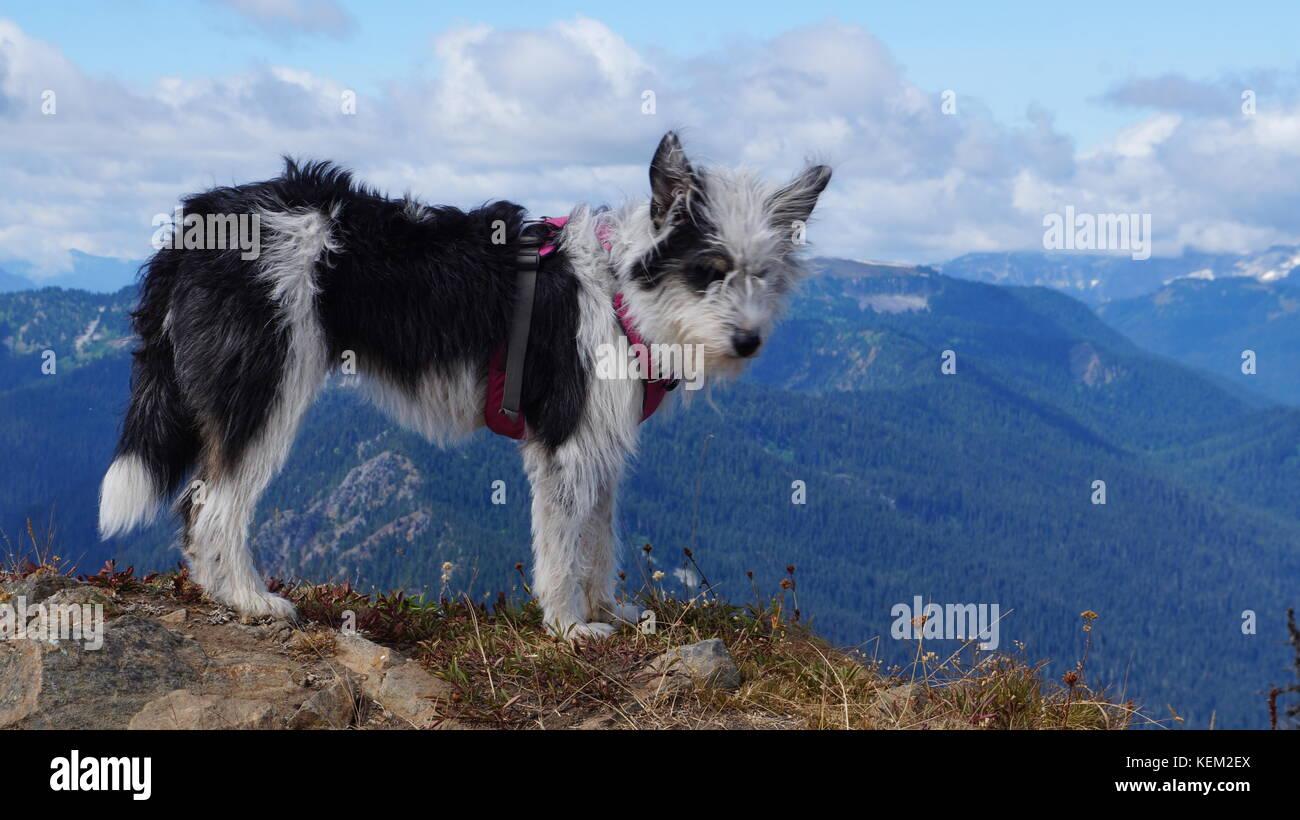 Exploring Washington State, the Great Pacific Northwest - Stock Image