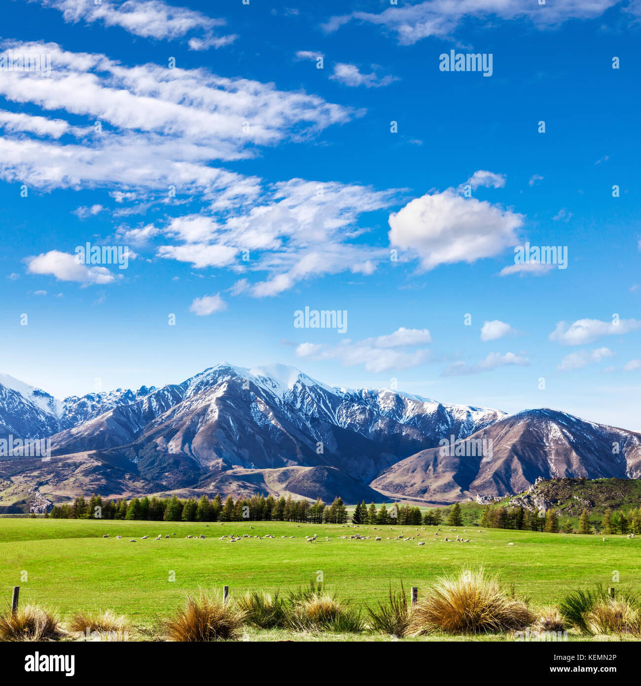 Canterbury New Zealand landscape, with tussock, pasture, sheep, mountains and blue sky. - Stock Image