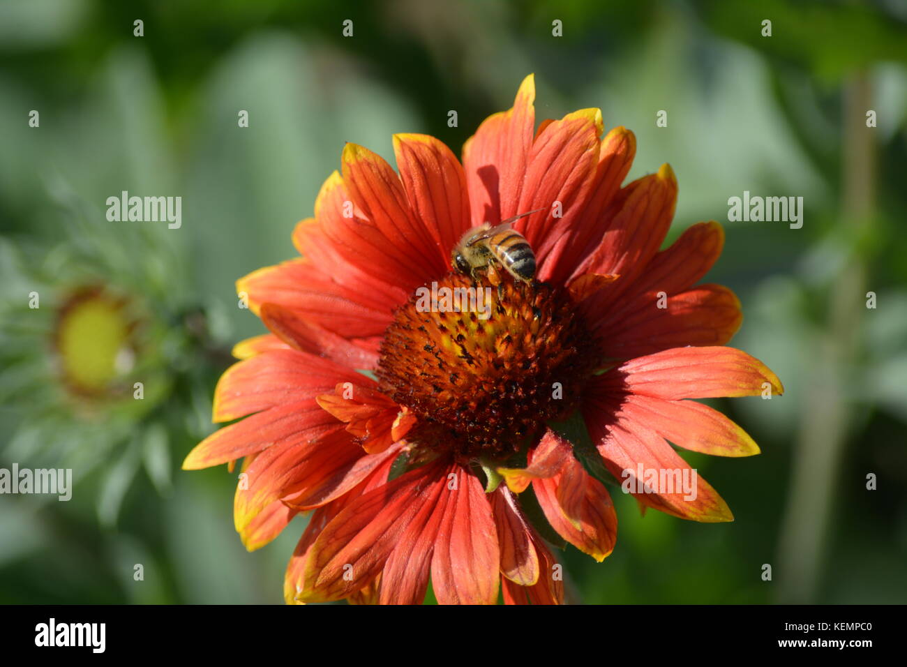 Macro shots of Autumn flowers with autumnal colors along the Charles ...