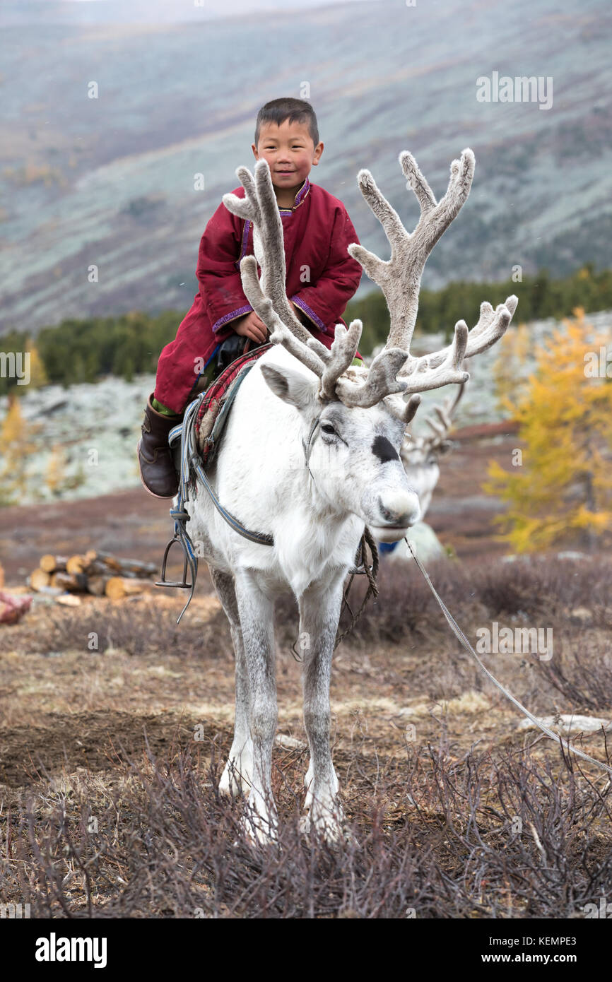 Little tsaatan boy in traditional Mongolian nomad outfit riding on his family's reindeer. Khuvsgol, Mongolia. - Stock Image