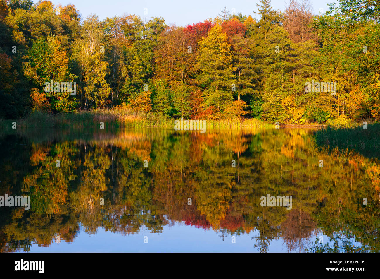 Small lake and fall color trees reflection - Stock Image