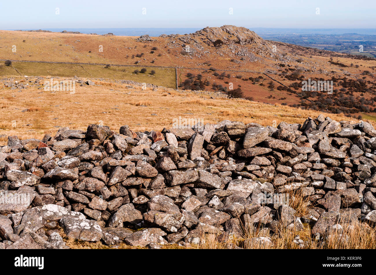 the bronze age stone wall of stowes pound on bodmin moor near the village of minnions in cornwall, england, uk. - Stock Image