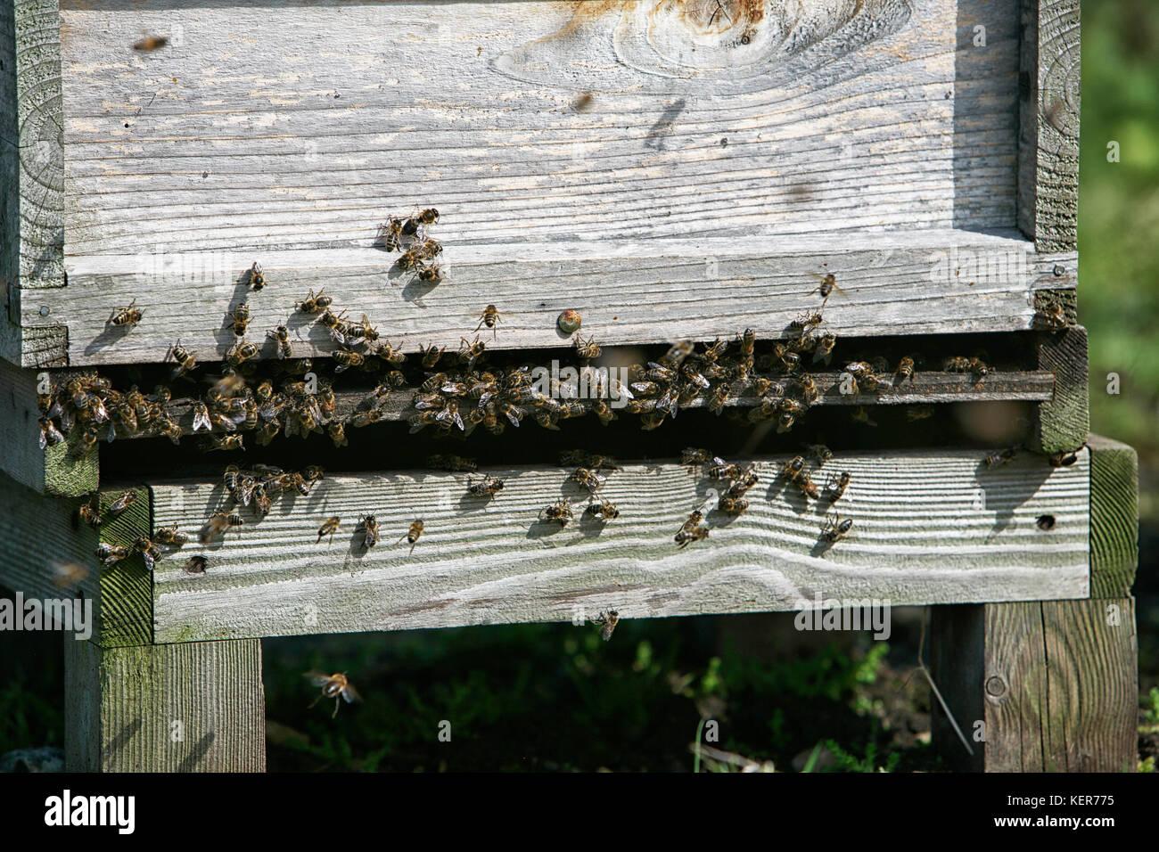 Fixed Comb Hives Stock Photos & Fixed Comb Hives Stock