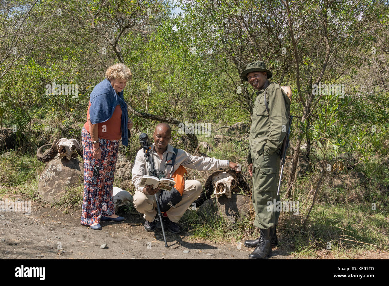 Guide and tourist examining buffalo skulls with a ranger 3, Arusha NP, Tanzania - Stock Image