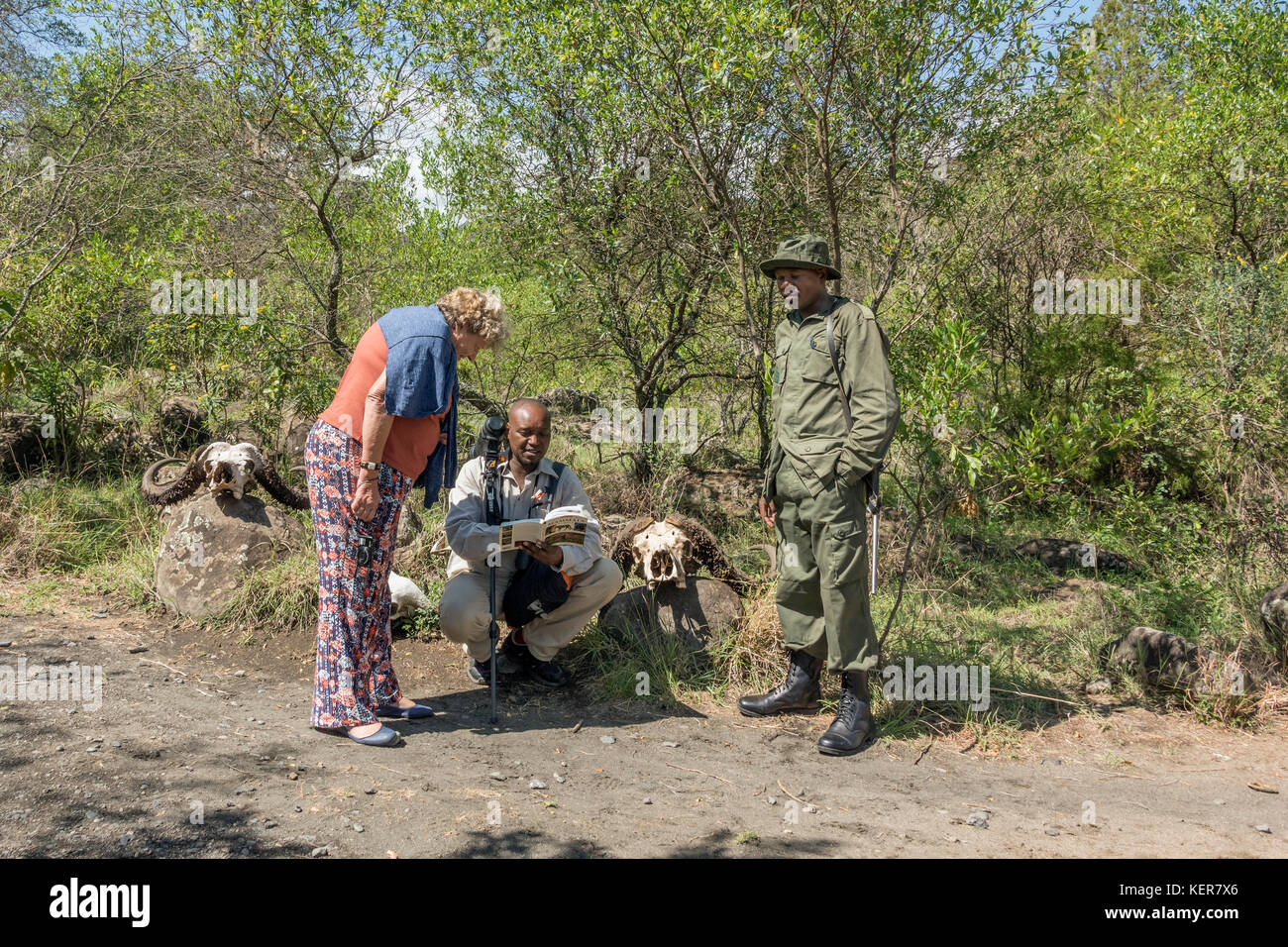 Guide and tourist examining buffalo skulls with a ranger 1, Arusha NP, Tanzania - Stock Image