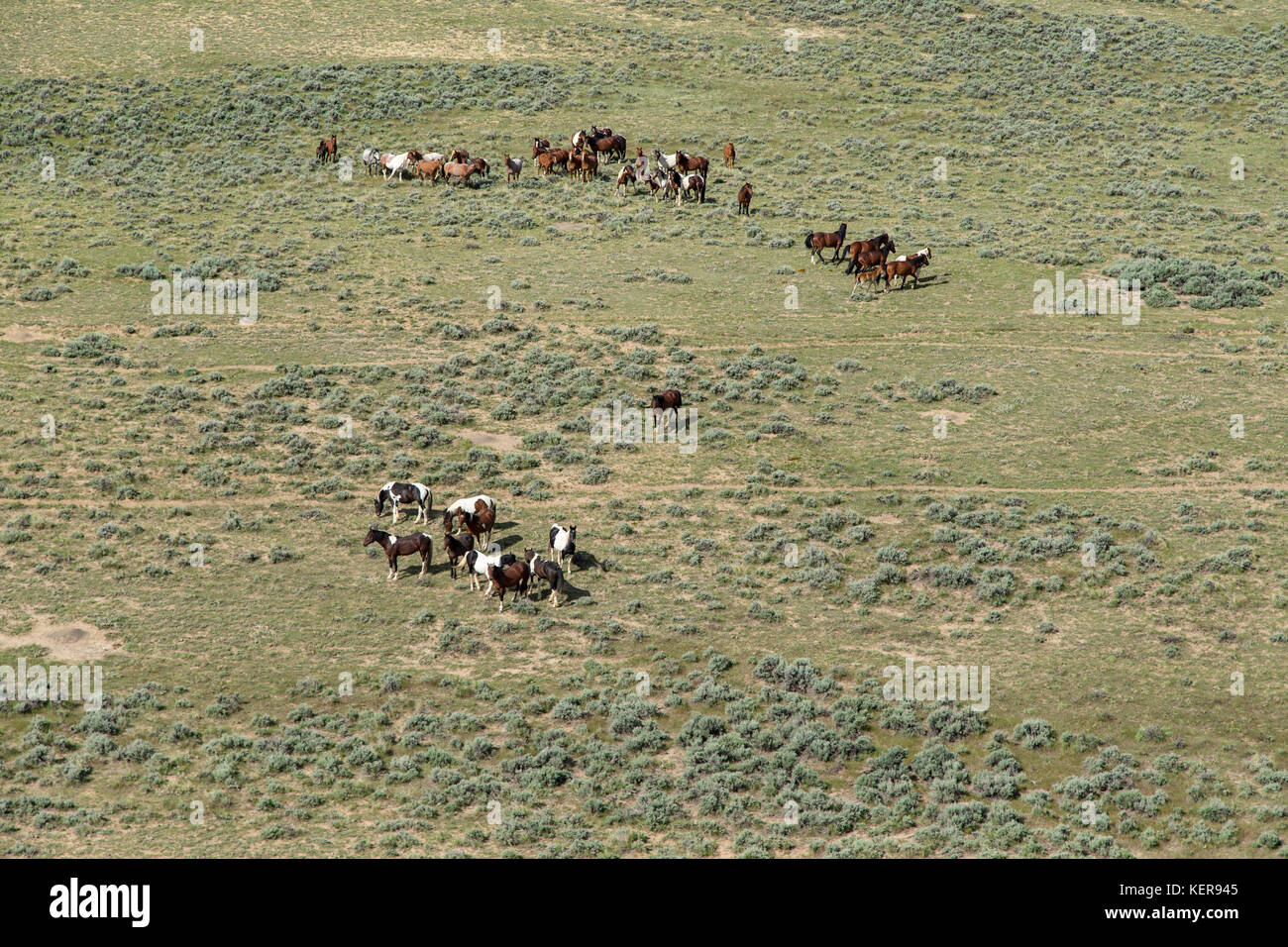 Aerial photos of wild mustangs in Wyoming - Stock Image