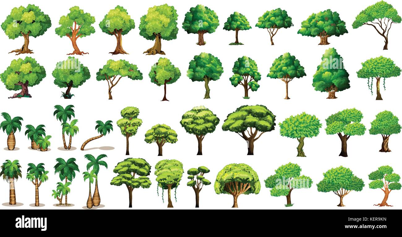 Diversity of trees set on white - Stock Vector