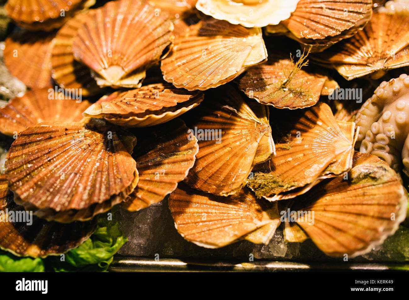 Fresh scallops seafood assortment at the fish market. Toned - Stock Image