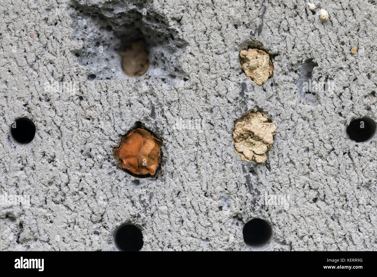 Insect House Plugged Cells in Thermal Block Cornwall; UK - Stock Image