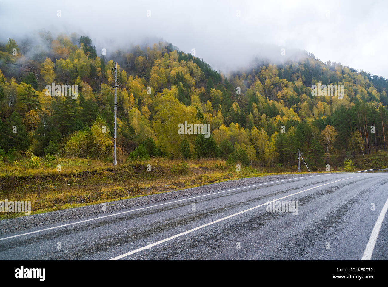 Federal highway M-52 Chuysky tract, asphalt road with markings among the autumn trees. - Stock Image