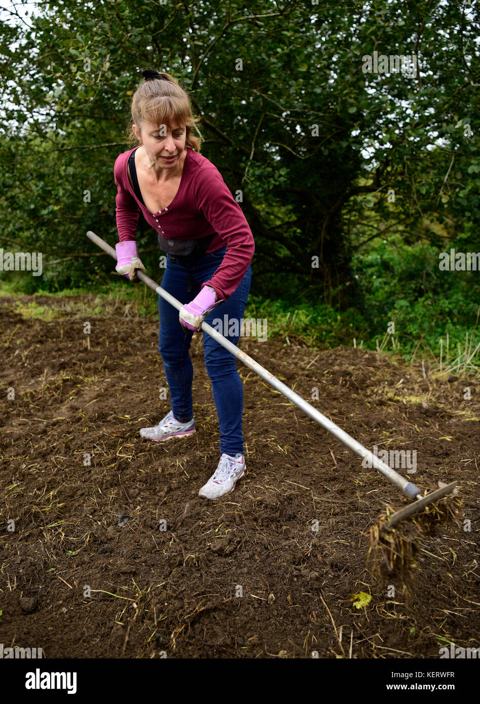 Woman doing voluntary work in her local community clearing land ready for planting wild flowers, Headley Down, Hampshire, - Stock Image