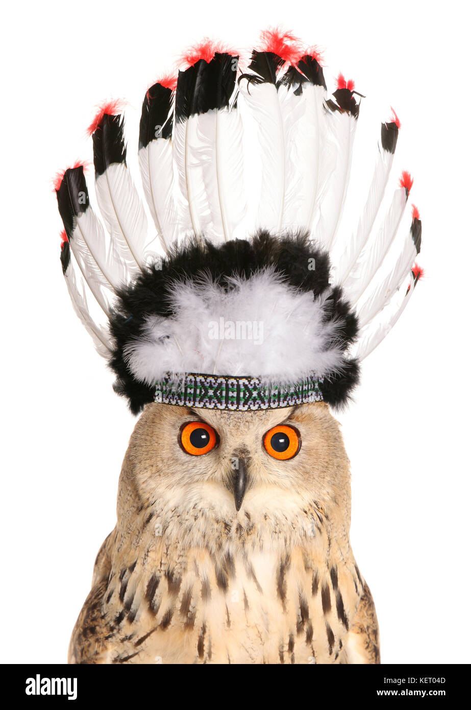 owl wearing red indian chief head feathers - Stock Image