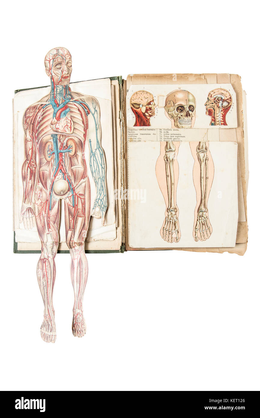 Human anatomy model in old medical book. - Stock Image