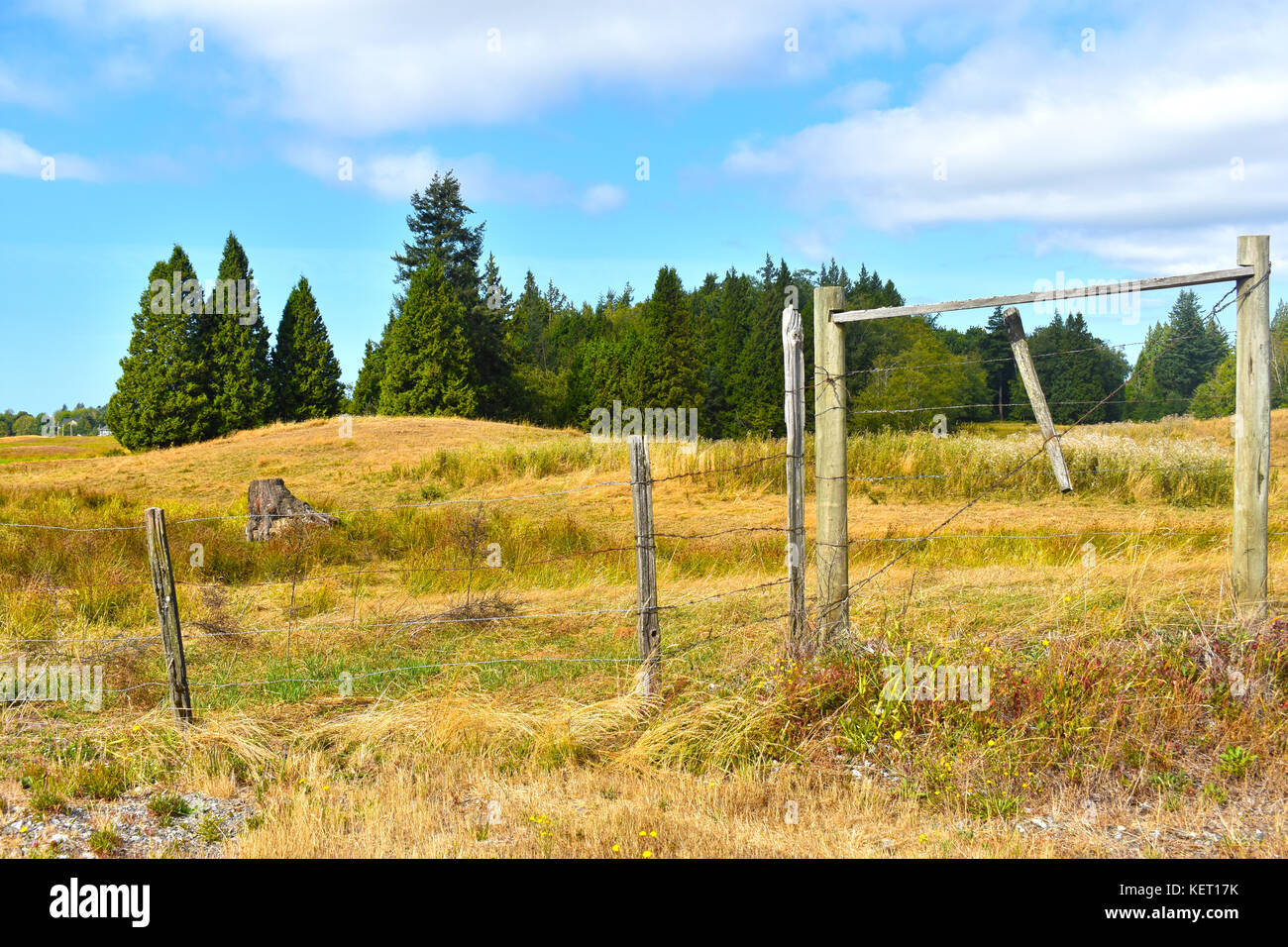 Beautiful Surreal Country Pastoral Scene With Open Field Beyond A Wooden Fence Evergreens Are In