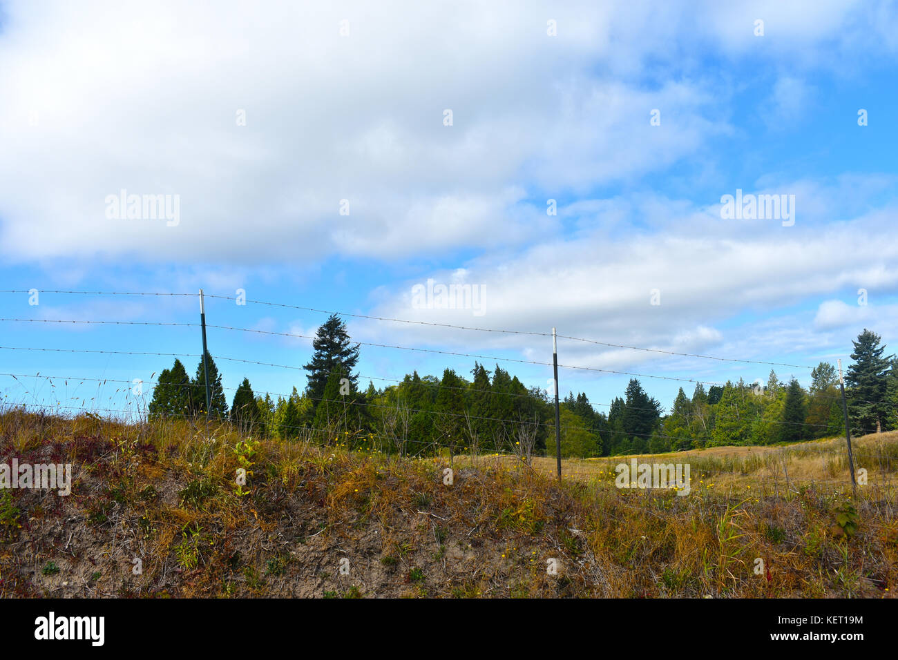 Beautiful country scene with fence on small hill and sunlit evergreens in the background - Stock Image