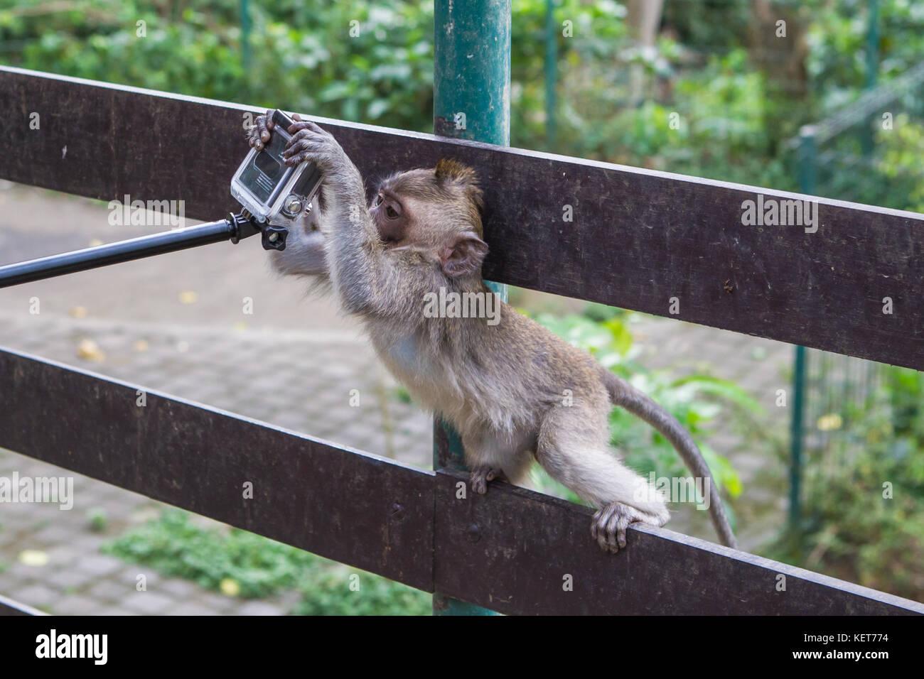 Ubud Monkey Forest. Bali, Indonesia. - Stock Image