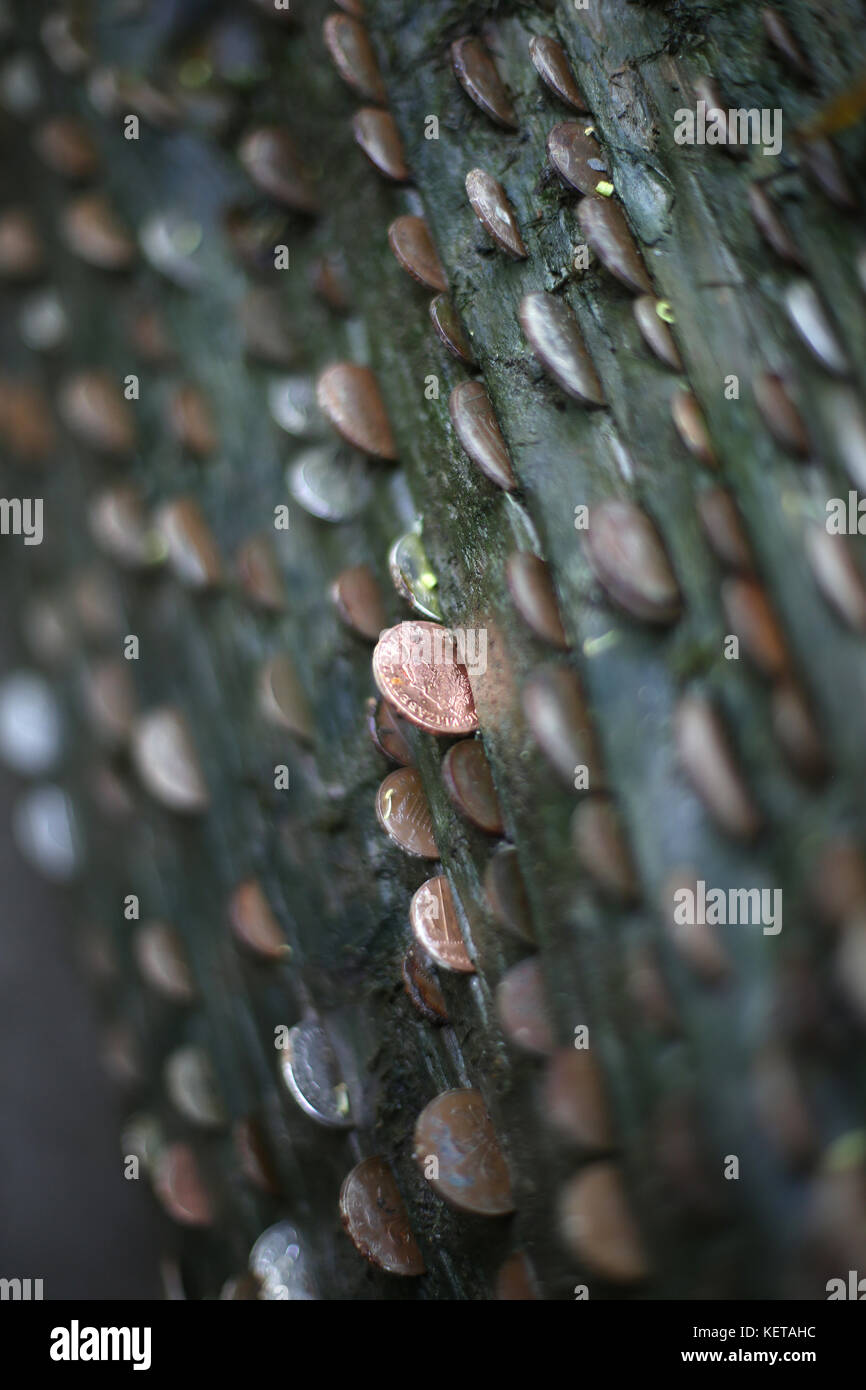 Pennies in a log - Stock Image