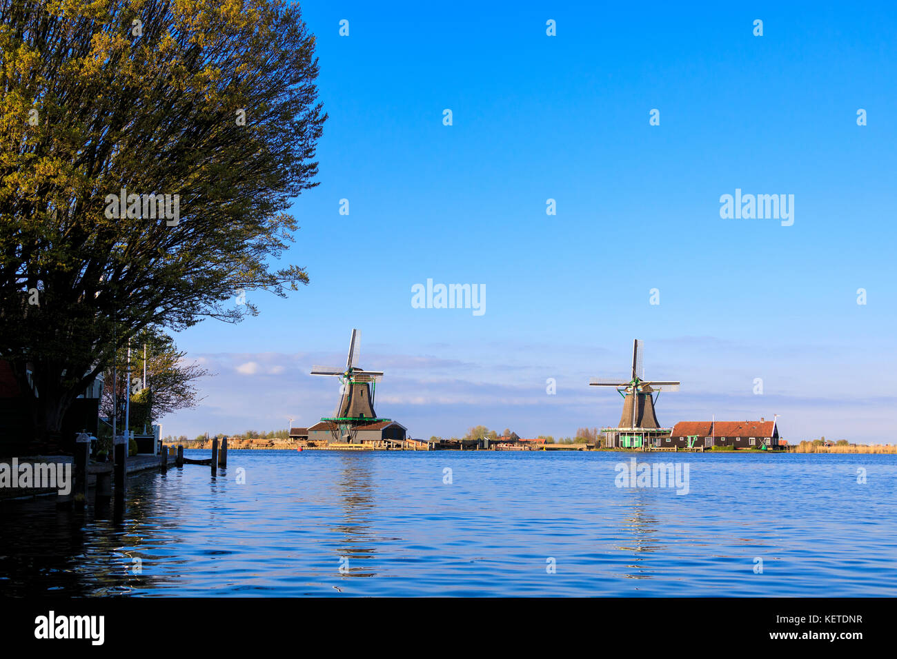 Typical windmills reflected in the blue water of river Zaan in spring Zaanse Schans North Holland The Netherlands - Stock Image
