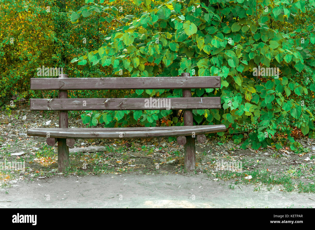 Magnificent Wooden Bench In The Forest With Green Leaf Background Stock Caraccident5 Cool Chair Designs And Ideas Caraccident5Info