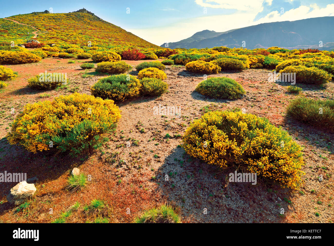 Nature splendor with flowering yellow and green bushes in mountain region at sping time - Stock Image