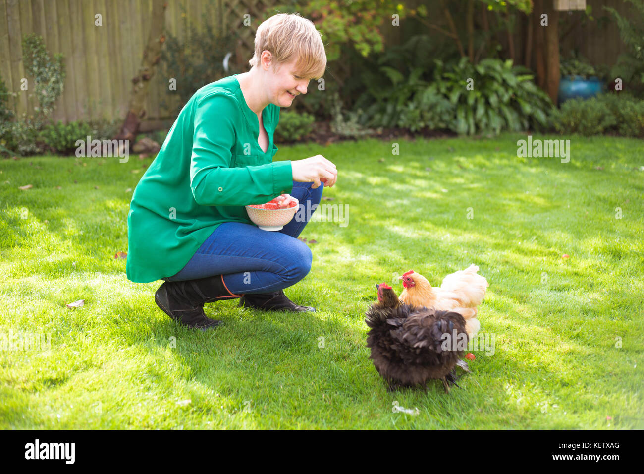 Lady feeding her bantam chicken pets - Stock Image