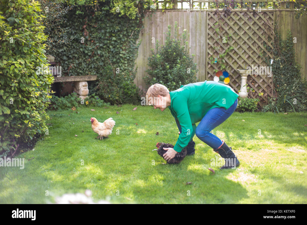 Lady chasing her bantam chicken pets - Stock Image