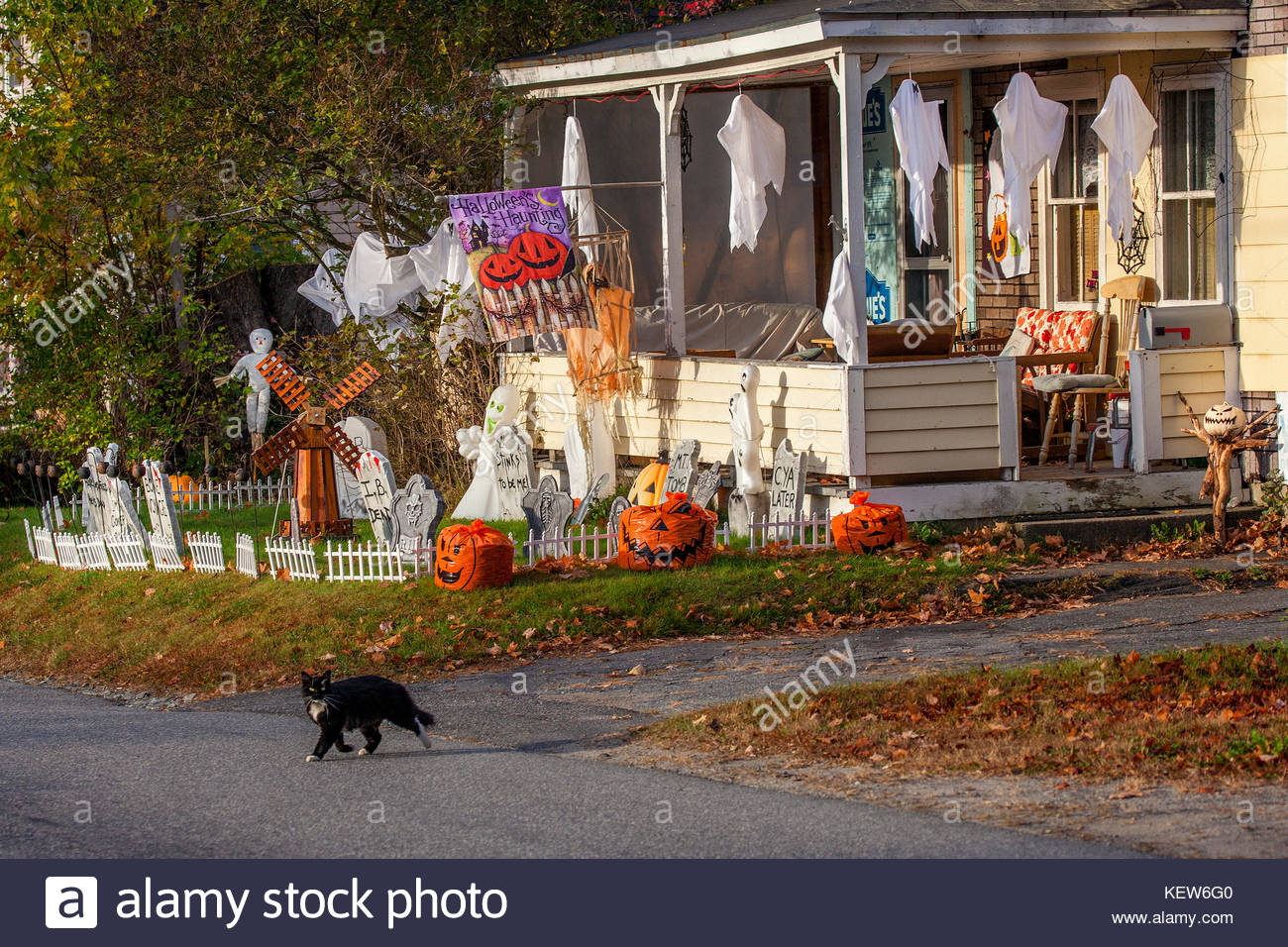 Amazing Halloween Decorations And A Black Cat In Front Of A Home In Download Free Architecture Designs Scobabritishbridgeorg