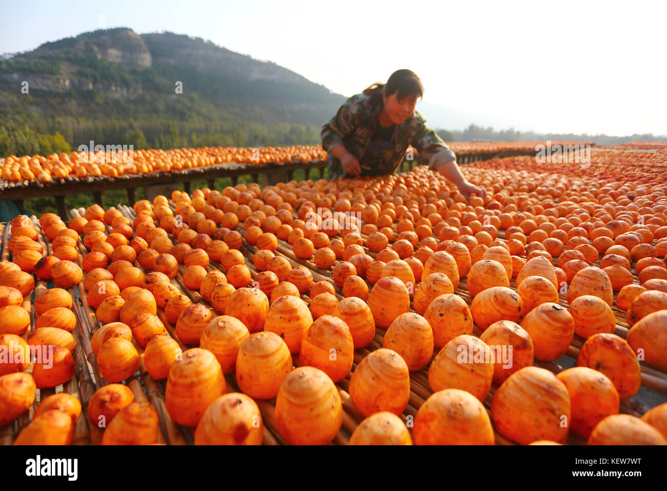 Zaozhuan, China. 24th Oct, 2017. (EDITORIAL USE ONLY. CHINA OUT) .A peasant airs the persimmons on the roof to make - Stock Image