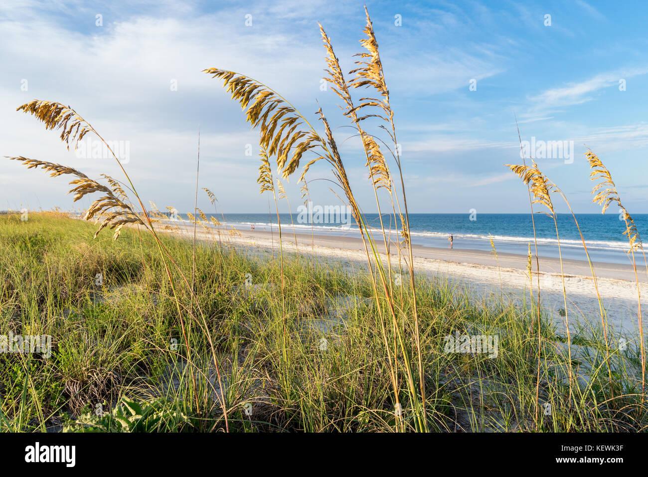 Sea Oats frame the beautiful beaches along Amelia Island, Florida - Stock Image