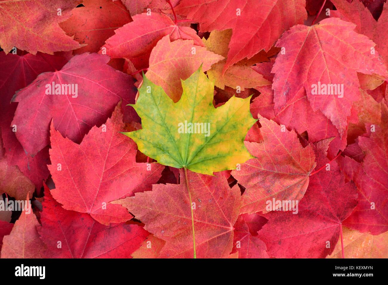 Seasons autumn fall season seasons greetings stock photos seasons premature fall stock image m4hsunfo