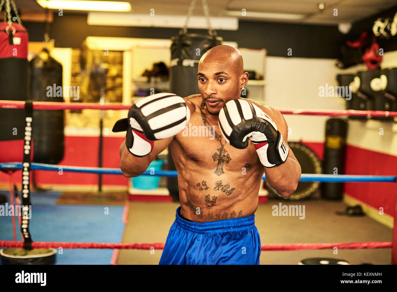 Male boxer training alone inside boxing ring, Taunton, Massachusetts, USA - Stock Image