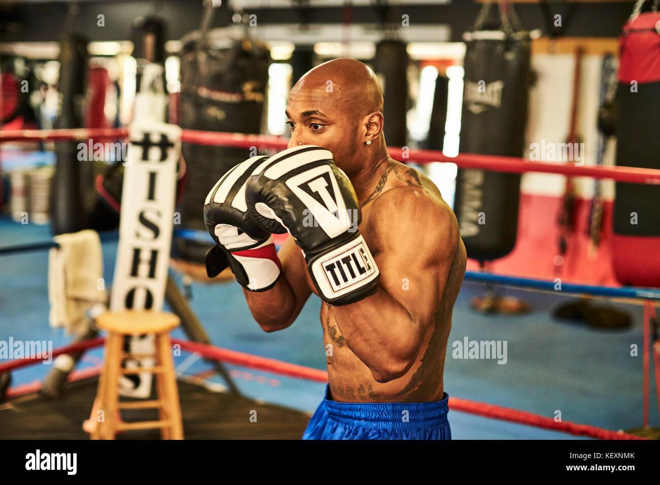 Male boxer training alone inside boxing ring, Taunton, Massachusetts, USA - Stock Image