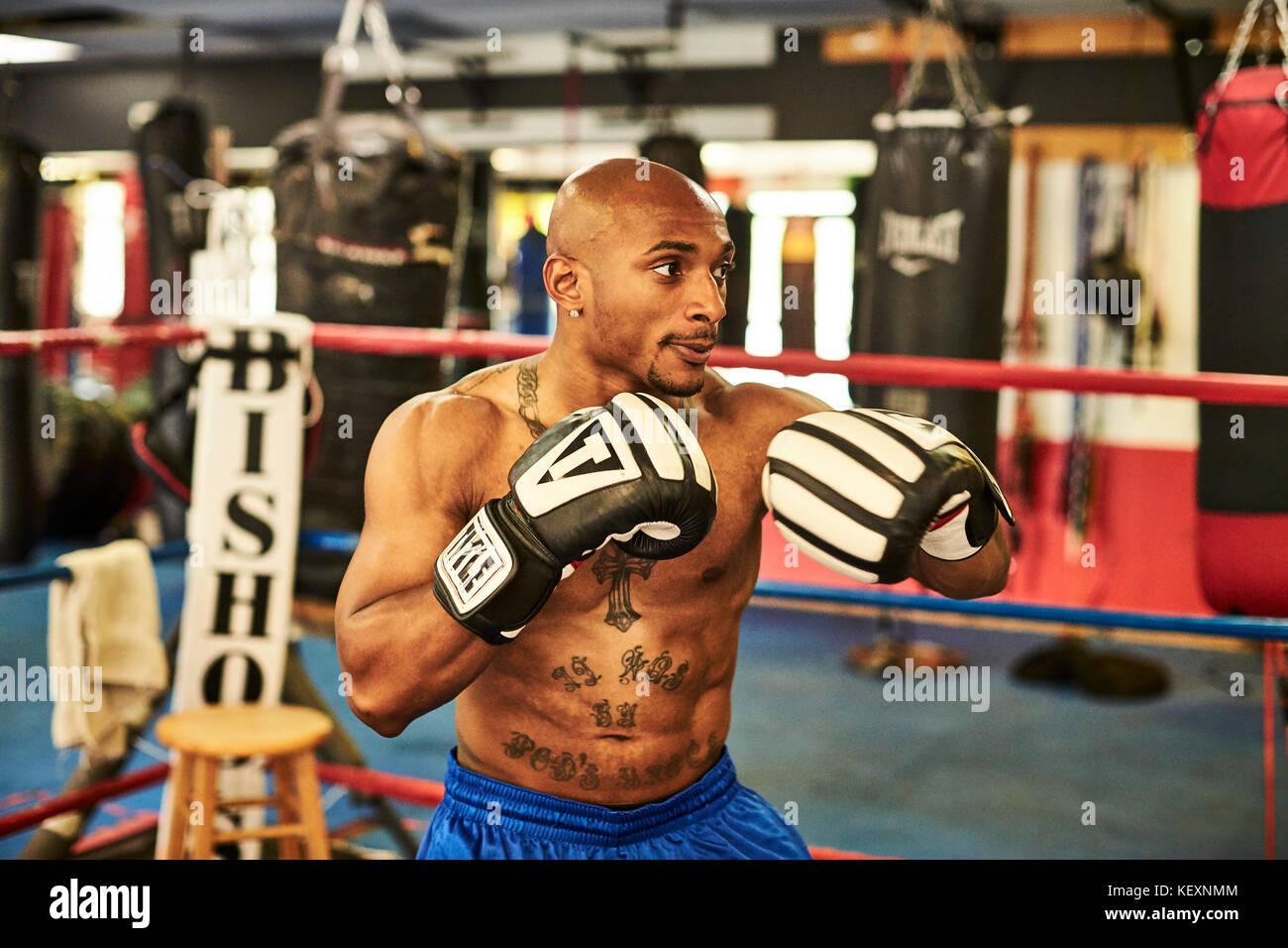 Side view of male boxer training inside boxing ring, Taunton, Massachusetts, USA - Stock Image