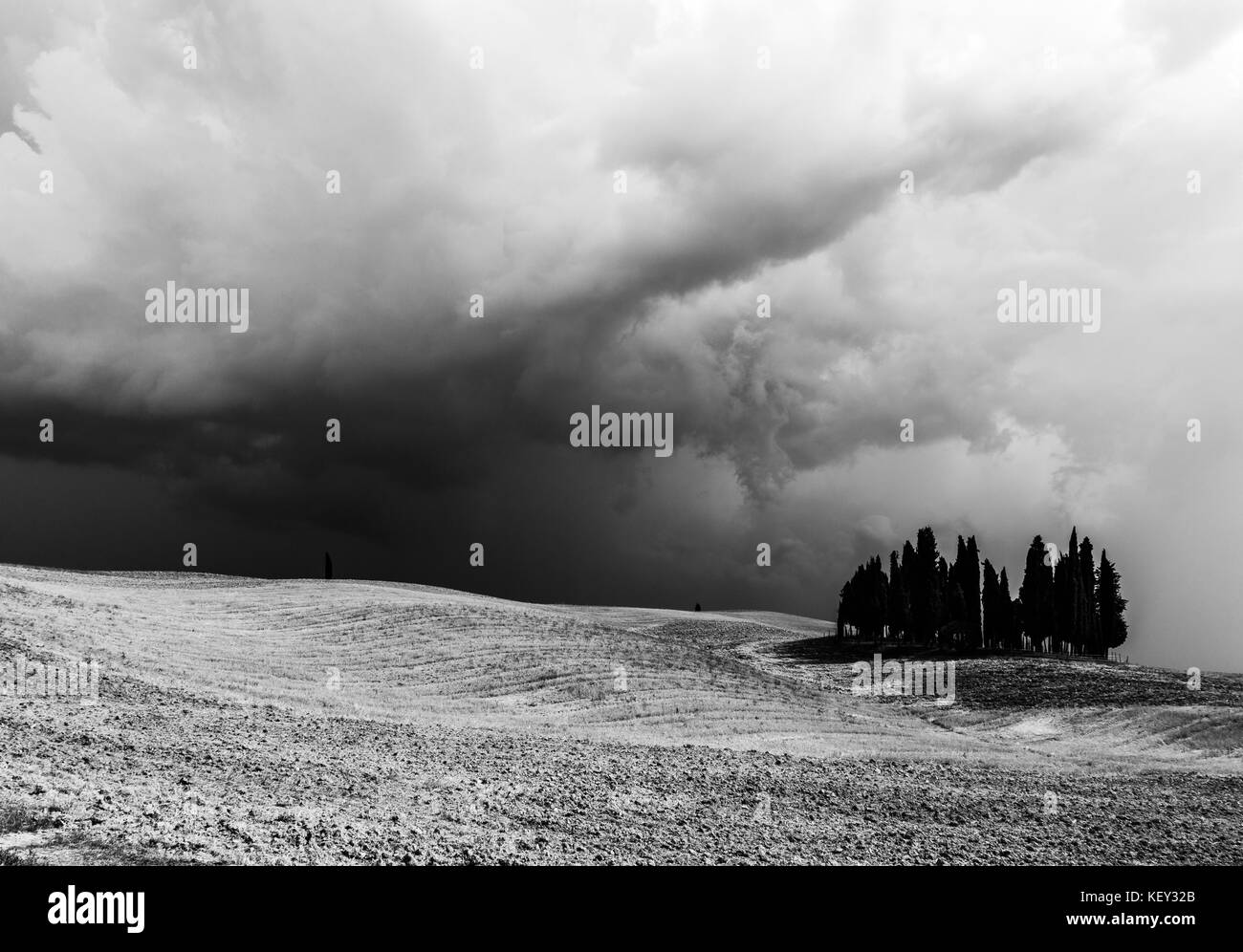 An isolated group of cypresses over an hill and beneath an overcast, moody sky - Stock Image