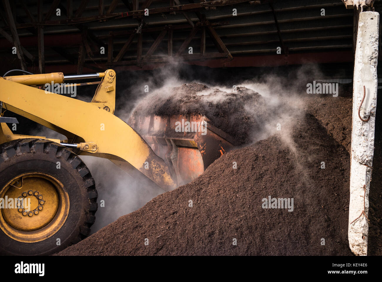 A tractor churning a large pile of steaming compost. - Stock Image