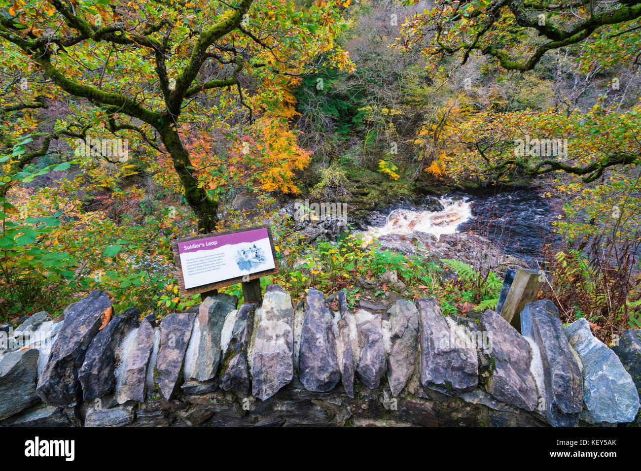 Spectacular autumn colours in natural woodland on banks of River Garry at historic Pass of Killiecrankie at Soldier's - Stock Image