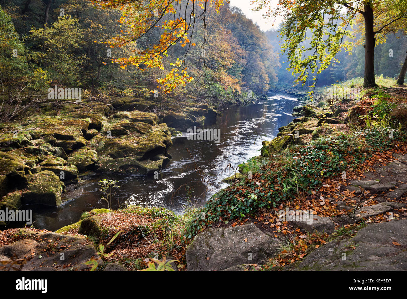 Autumn, Strid Woods and the River Wharfe, Bolton Abbey, Wharfedale, North Yorkshire Stock Photo
