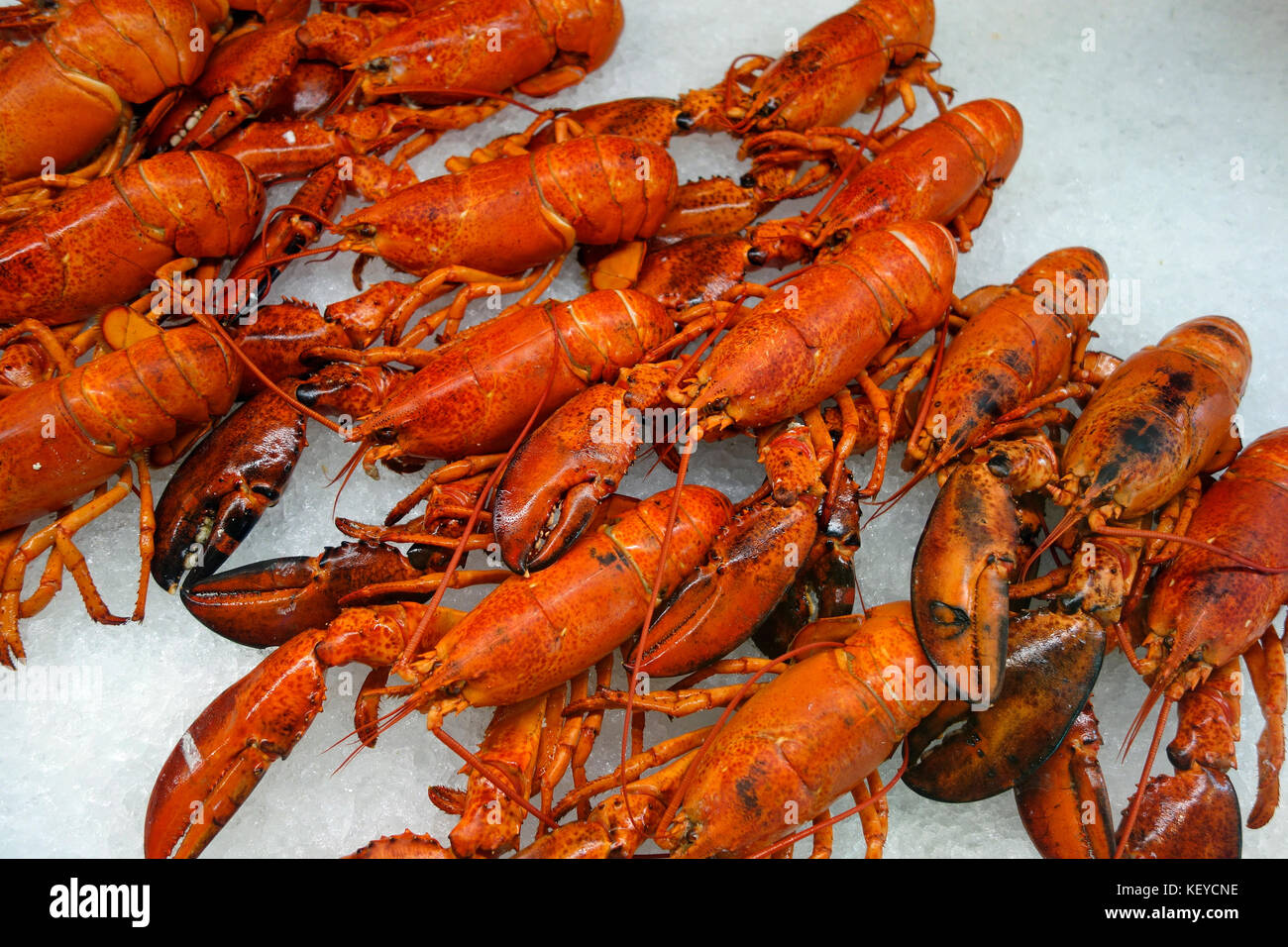 Lobsters on ice - Stock Image