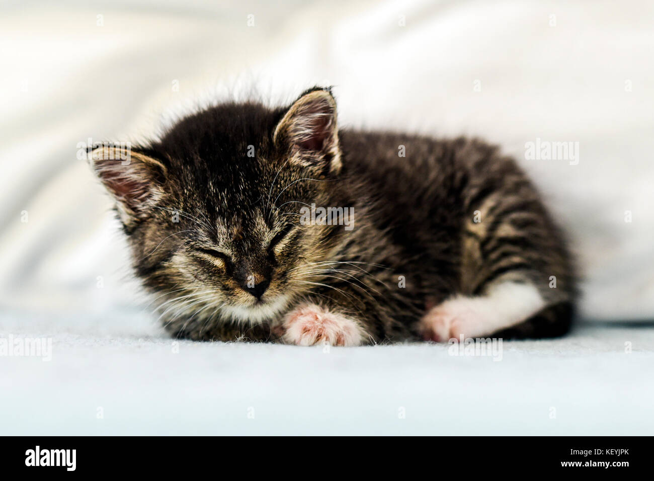 A cute little kitten lying and sleeping on a couch at home. - Stock Image