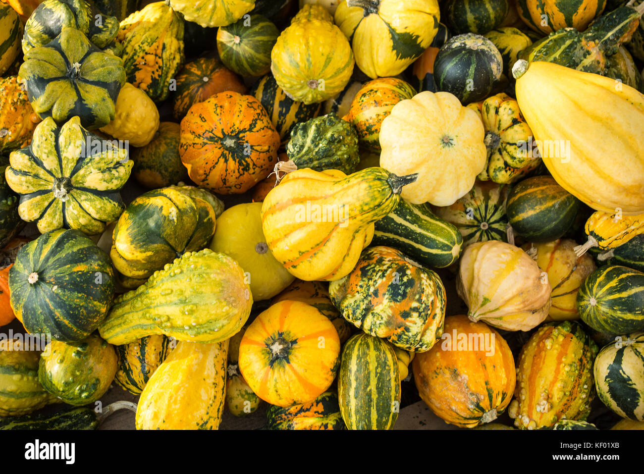 Mini pumpkins in different colors lying on the ground - Stock Image