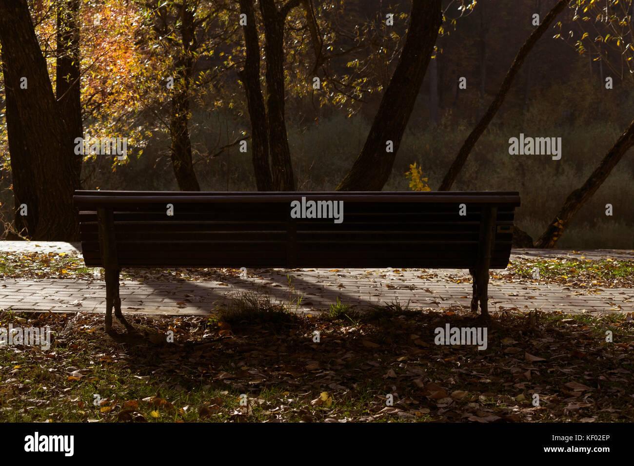Wooden bench in a park, centered, morning light, autumn - Stock Image