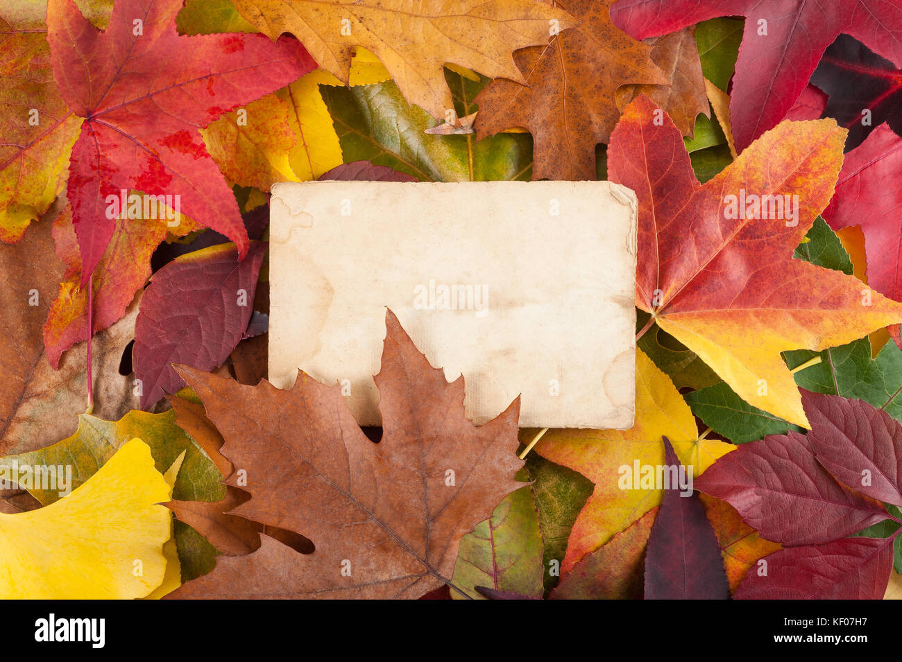 paper sheet  on dry  leaves background - Stock Image