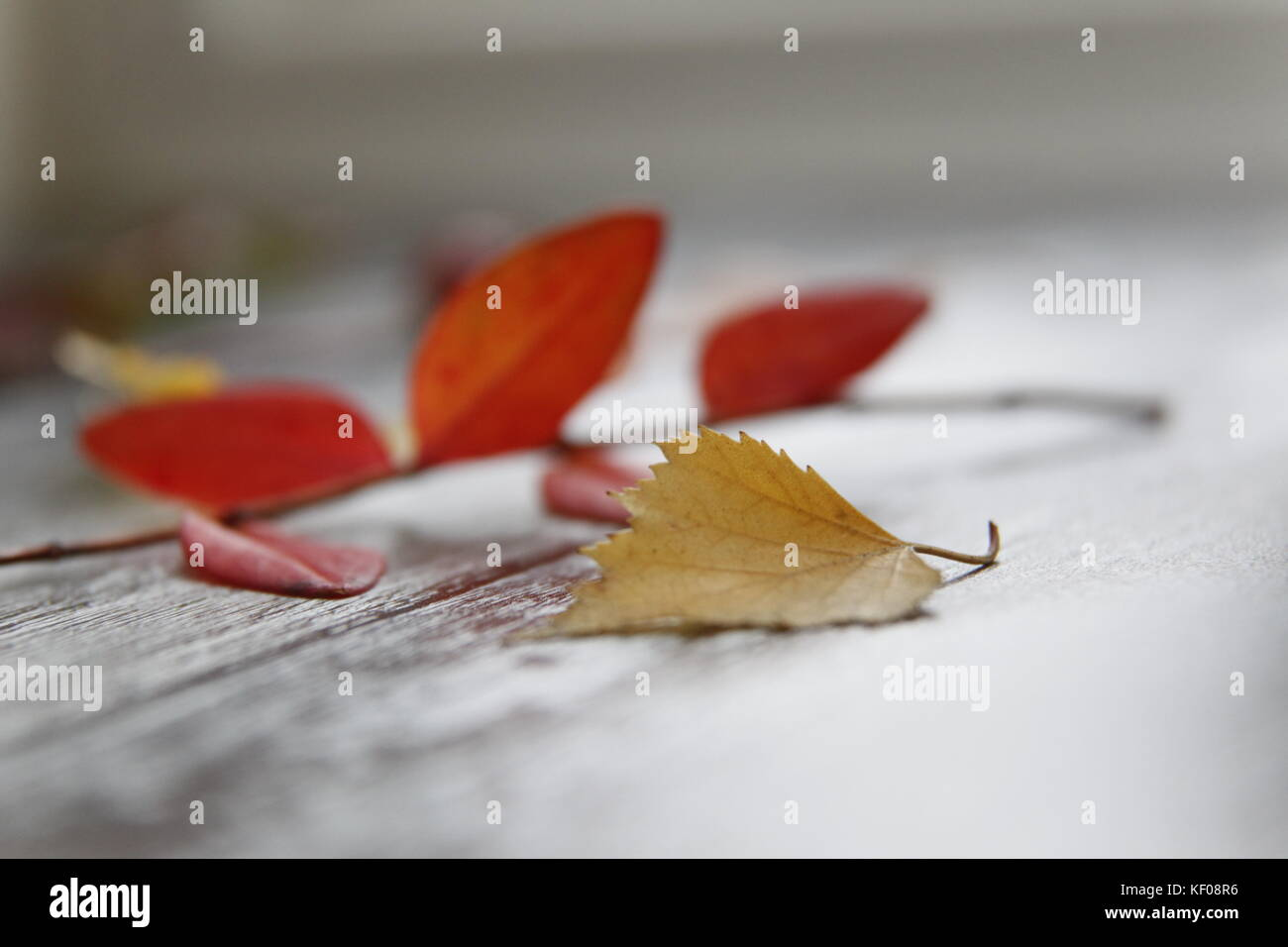 Autumn still life with leaves - Stock Image